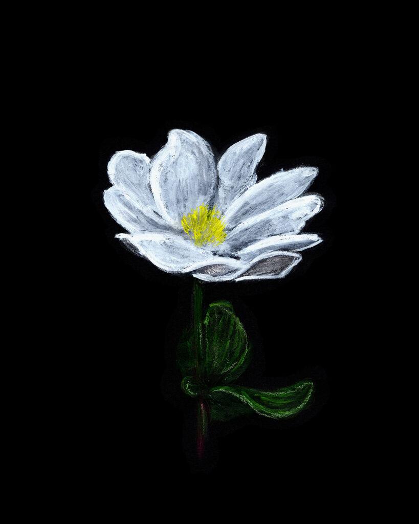 bloodroots spring flowers acrylic painting anderidaart