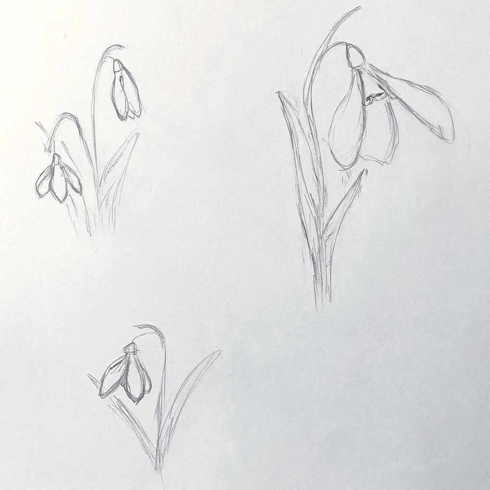 white spring flowers sketch anderidaart