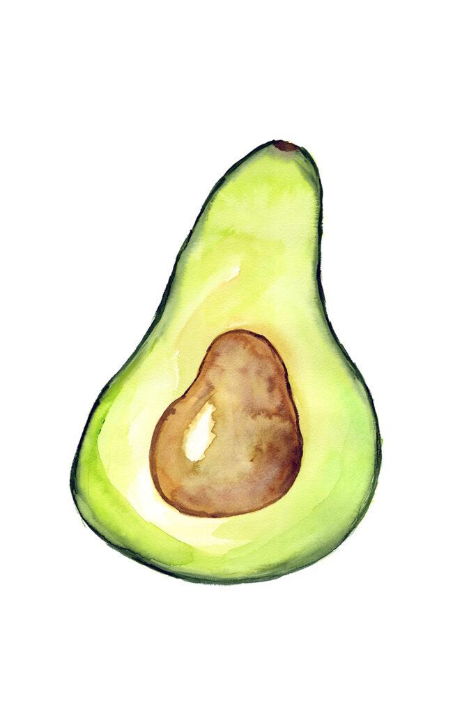 avocado illustration anderidaart